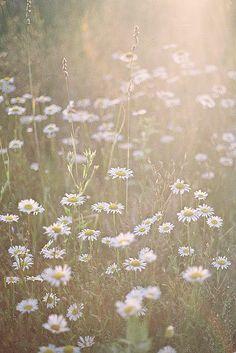 daylight and daisy.