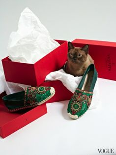 The Cat and the Flat for Vogue - Carmelo (aka Mello) with Valentino hippie chic embroidered espadrilles l #shoes
