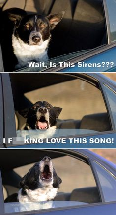 funny pictures of dogs...ARE this sirens???