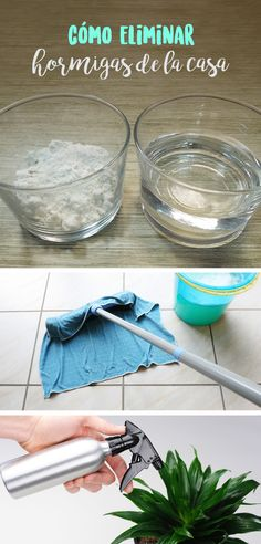 En la temporada de calor y lluvias las hormigas empiezan a invadir la casa, te comparto varios tips para que sepas cómo eliminar las hormigas de tu casa.