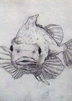 Fish art print pencil illustration - Searching swamp light - by Marie-Noëlle Wurm, $15.00