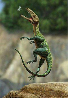 *Juravenator starki chasing a flying insect . Art by Sergey Krasovskiy