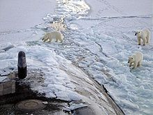 Polar bears on the sea ice of the Arctic Ocean, near the North Pole. USS Honolulu pictured.