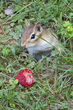 Caught ! by Larry Landolfi    Squirrels, Rabbits, Chipmunks etc hate the smell of marigolds.  Planting them around your garden prevents unwanted guest.  But remember these are God's creatures too and share a little of what you raise with them.