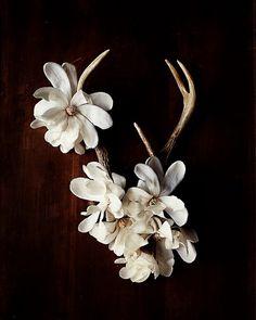 Creative Flower Shoots by Kari Herer