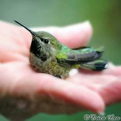 In magick, hummingbirds represent positive energy, independence, decisive action and resilience.