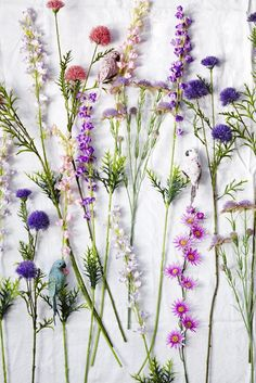 Wild Flowers illustrated botanical print - plant print botany botanical print botanical wild flowers floral floristry flowers print Spring Summer 15 catalogue from RICE Wild Flowers, Beautiful Flowers, Lavender Flowers, Lavender Plants, Exotic Flowers, Summer Flowers, Fresh Flowers, Colorful Flowers, Purple Flowers