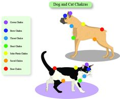Dog Cat 7 Chakras Educational Charts Animals by EarthChiJewelry