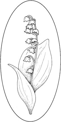Click to see printable version of Lily Of The Valley 4 coloring page