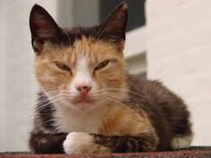 Free Image on Pixabay - House Cat, Lapjeskat, Relax Free Pictures, Free Images, Cat Reference, Relax, Cats, House, Animals, Outdoor, Outdoors