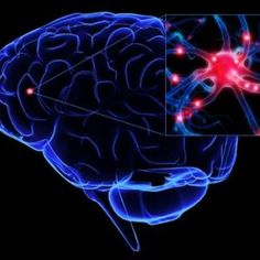 Turmeric Regenerates the Brain and Boosts Cognitive Function