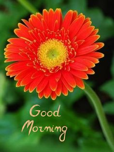 Good Morning, Happy, Plants, Buen Dia, Bonjour, Ser Feliz, Plant, Good Morning Wishes, Planets