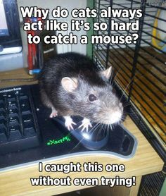 uh... wrong kind of mouse