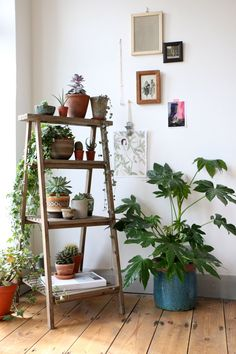 Love the look of this corner. Simply styled decor, focus on plants & art. This could work well in our living room or bedroom. house plants, succulents, cactus and indoor gardens Decoration Plante, Flower Decoration, Garden Decorations, Home And Deco, Ladder Decor, Plant Ladder, Diy Ladder, Rustic Ladder, Ladder Display