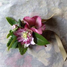 Hellebore and Daphne Buttonhole www.thomasbloom.co.uk