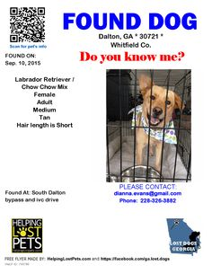 Found Dog - Labrador Retriever - Dalton, GA, United States
