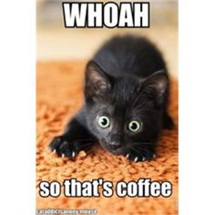 so that's coffee - Google Search