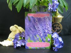 """10-23-14 Today, I was drawn to the card deck, """"Flower Therapy Oracle Cards – Let Go of Anxiety: Calm your nerves and you'll be able to hear the voice of your angels.""""  Anxiety... what a word and a place to be. I know first hand how anxiety and panic can effect our lives. I have been suffering with this for .... To continue reading, please click the following link:  https://www.facebook.com/photo.php?fbid=298354267025843&set=a.236296053231665.1073741830.100005538166652&type=1&theater"""