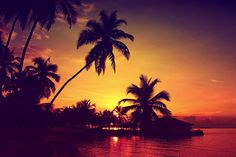 palm tree silhouette #sunset