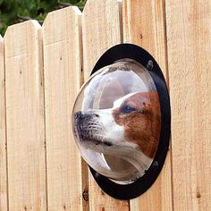 Excellent for the nosy dog.