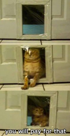 Cat pranks, lol
