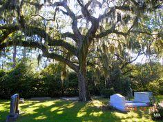 All Saints Episcopal Church Cemetery  Pawleys Island Georgetown County South Carolina, USA
