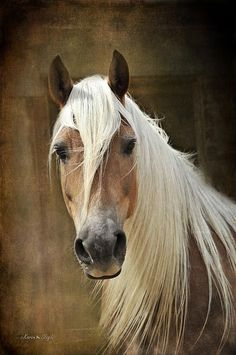 bruno-bolognese27:  #horses #photography, I've saved this o.k. but what's so special with this photo???