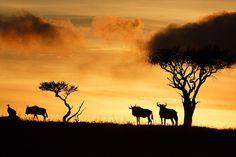 kenyan safari at the masai mara