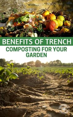 Every gardener needs a good source for compost, but so many dread the compost pile! It's unsightly, it smells bad and can even attract unwanted critters. The thought of turning the compost pile keeps many gardeners from making their own compost. Garden Compost, Hydroponic Gardening, Vegetable Garden, Container Gardening, Organic Compost, Organic Gardening, Gardening For Beginners, Gardening Tips, Flower Gardening
