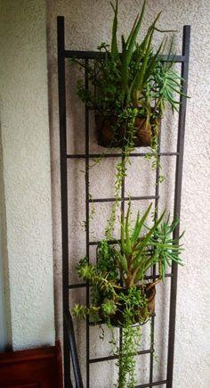 Trellis design idea: hanging baskets on a simple iron trellis. ( Good idea to make a trellis pretty while waiting for plants to grow.)