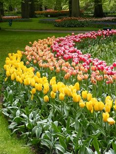 It's a Snap: Travel photos from around the world - TODAY Travel Tulips
