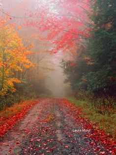 """Misty Trail, Blackwater Falls State Park - WV.  By Laura Moul  Reminds me of the John Keats poem about Autumn that starts with the line....  """"Season of mists and mellow fruitfulness"""". Beautiful."""