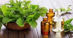 Peppermint Oil Uses. Peppermint Oil as a Home Remedy. Fast and Natural use of Peppermint Oil. Peppermint oil for body and health. Essential Oils For Vertigo, Best Essential Oils, Essential Oils For Dizziness, Herbal Remedies, Home Remedies, Natural Remedies, Remedies For Menstrual Cramps, Troubles Digestifs, Candida Overgrowth