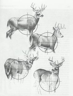 A lovely fuck-ton of basic deer references (per request; the antlers are a bonus). [From various sources.] Credit for the third image in the top right goes to: http://jewishfish.tumblr.com/post/5530203506/mhm-yeah-finally-finished-this-today-after.
