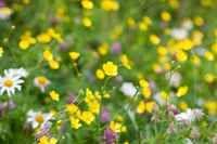 Pollinator friendly wildflowers