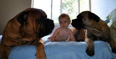 Step Away from the Baby Bethany P. posted this adorable photo on Ellen's Facebook page! This little baby may not have a lot in terms of clothes, but when it comes to security, this baby is set. | Best Pet Photos - Ellen DeGeneres Photo Gallery