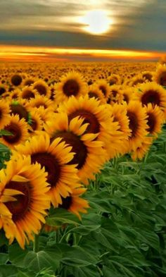 For a young man who took his own life please say a prayer as he loved sunflowers we will remember you Derek.