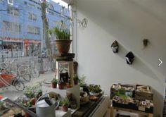 STEK de stadstuinwinkel! Het stadstuincentrum voor tuin en balkon!