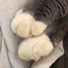 . 朝からおててを触りまくってたら 怒られました( ˙-˙ ) . . #cat #catsagram #catstagram #猫 #ねこ #ねこ部 #ねこラブ #ねこバカ #ねこら部 #ねこスタグラム #ねこすたぐらむ #ねこ好き #ペコねこ部 #ねこと暮らす #にゃんこ #にゃんこ部 #にゃんすたぐらむ #にゃんすたグラム #にゃんだふるらいふ #くつしたねこ #くつしたにゃんこ #ぬこ #スコティッシュフォールド #すこてぃっしゅふぉーるど #スコティッシュ立ち耳 #愛猫 #愛猫同好会