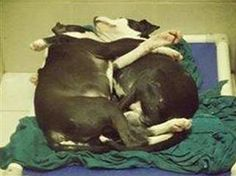Shelter dogs caught cuddling are adopted after outpouring of support. http://www.today.com/pets/shelter-dogs-caught-cuddling-are-adopted-after-outpouring-support-2D11644674