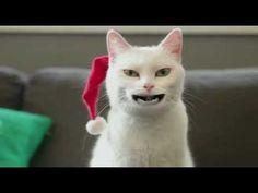 De Jodelende Kat