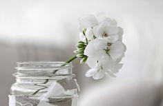 20110511-01-white-flower-mason-jar