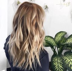 Golden blend ⚡️ created by #bofbeducator @lindseylovesbalayage
