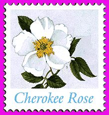 When the Trail of Tears started in 1838, the mothers of the Cherokee were grieving and crying so much, they were unable to help their children survive the journey. The elders prayed for a sign that would lift the mother's spirits to give them strength. The next day a beautiful rose began to grow where each of the mother's tears fell.