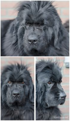 #Lensbaby #Dog