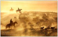 shepherds by songzhujutx #travel #traveling #vacation #visiting #trip #holiday #tourism #tourist #photooftheday #amazing #picoftheday