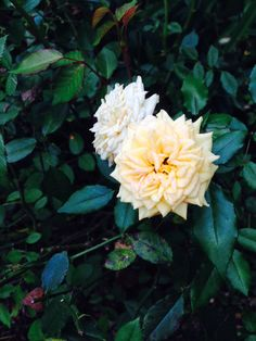 Roses! :)