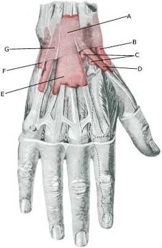 Rehabilitation for Inflammation of the tendon sheath on the outer wrist - SportNetDoc Wrist Pain, Wellness Fitness, Home Remedies, Fitness Inspiration, Exercises, Healthy, Exercise Routines, Excercise
