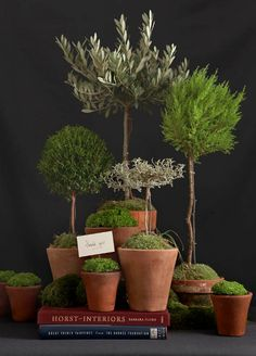 Topiary Collection