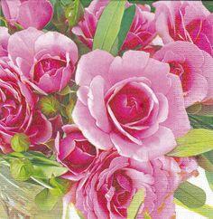 【Garden Rose】
